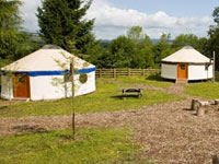 Yurt Camp, Gorse Blossom Farm